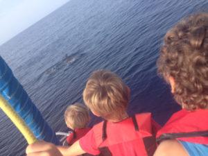 17-10-dauphins-2